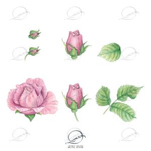 floral-elementos-rosas-corderosa-delicadas