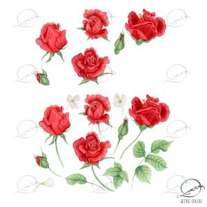 elementos decorativos para download - rosas vermelhas