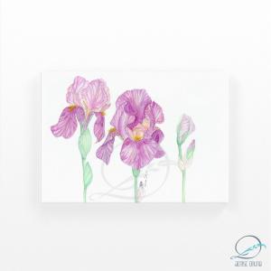 Aquarela original trio de íris floral
